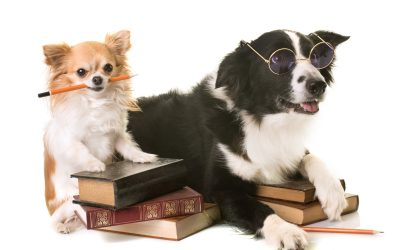 Back to School: Tips for Your Dog