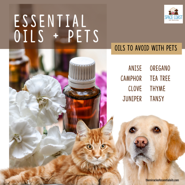 essential oil safety for pets