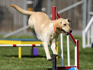 Dog Training 1 - January is National Train Your Dog Month