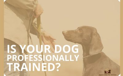 January is National Train Your Dog Month