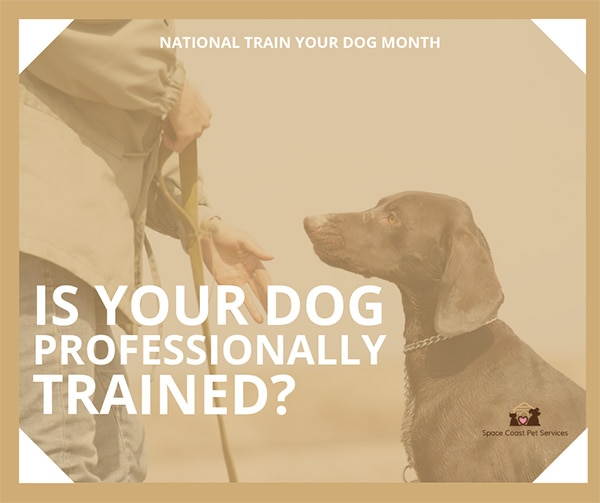 Train Your Dog in Brevard County, Florida
