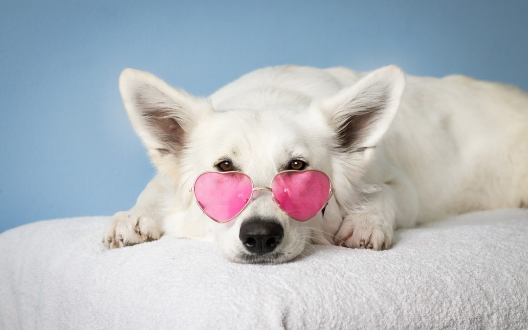 Top 8 Ways to Spend Valentine's Day with Your Pet