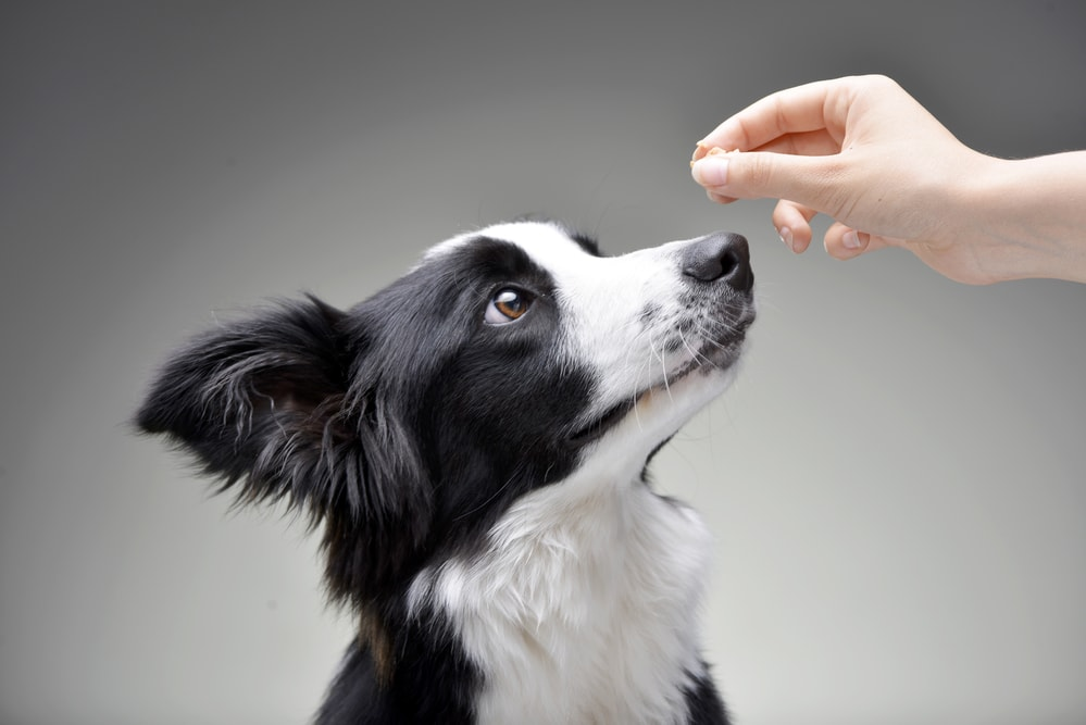 Choosing the Best Training for Your Dog