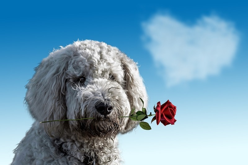 Top Ways to Spend Valentine's Day with Your Pet
