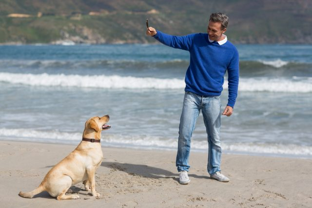 choosing the right dog trainer in brevard county