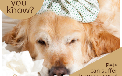 What to Do If Your Dog or Cat Has Allergies in Brevard County