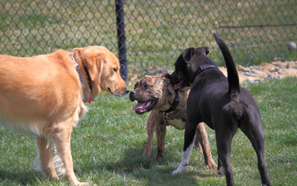 Best Dog Parks in Central Brevard County, FL