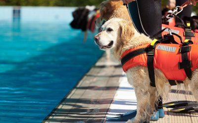 Preventing Pet Drownings in Brevard County, Florida