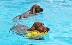 Preventing Pet Drownings in Brevard County