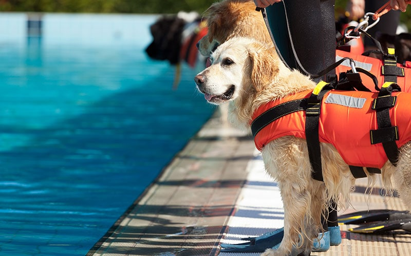 Can Your Dog Swim? Preventing Pet Drownings in Brevard County, Florida