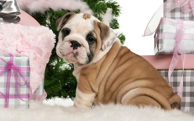 So You Got a Puppy – Now What?