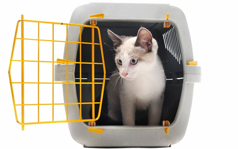 4 Pet Care Options For Travel