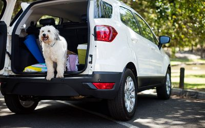 4 Pet Care Options For Your Summer Travel