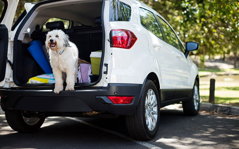 4 Hot Pet Care Options for Your Summer Travel