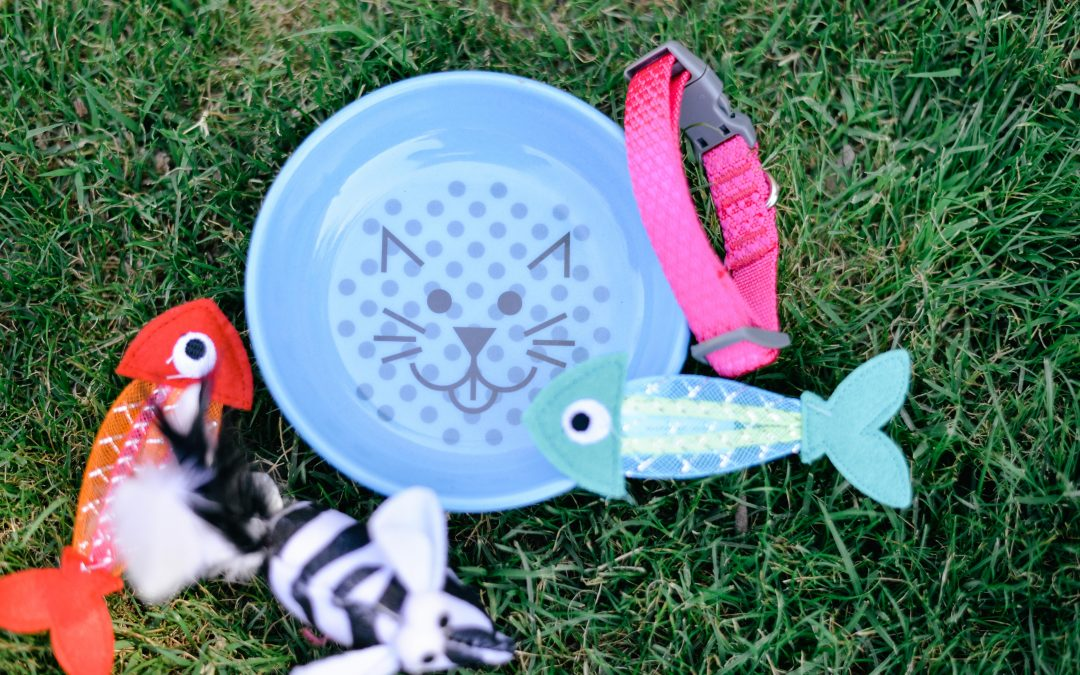 4 Cat Toys You Can Make at Home in Minutes