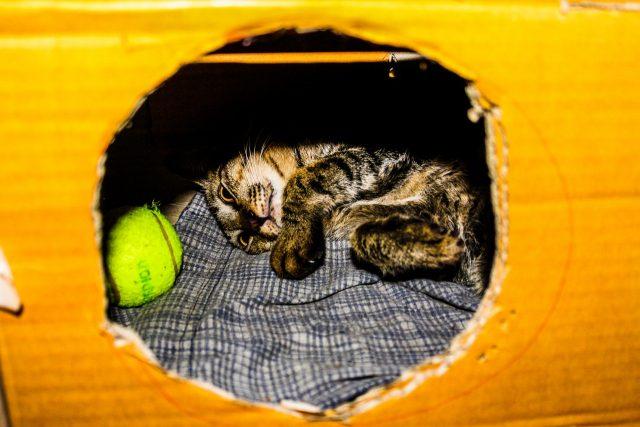 Cat Box Castle Toy