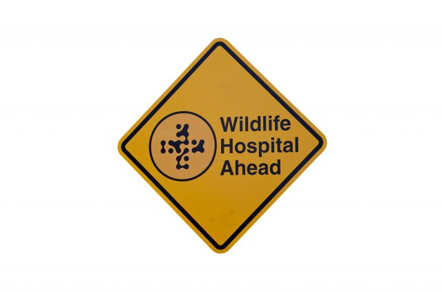 florida-wildlife-rescue-hospital