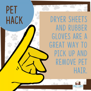 pet-cleaning-hack-melbourne-florida