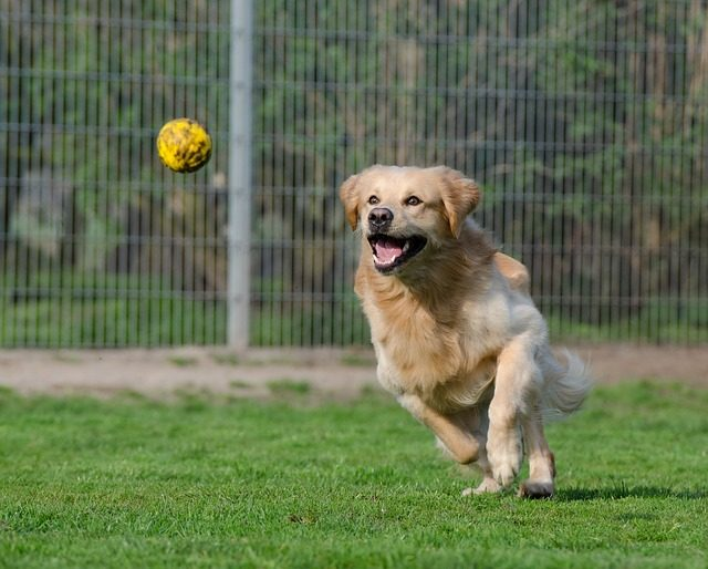 best fetch toys for dogs melbourne florida