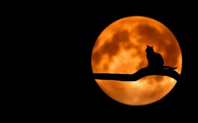 mystery black cat