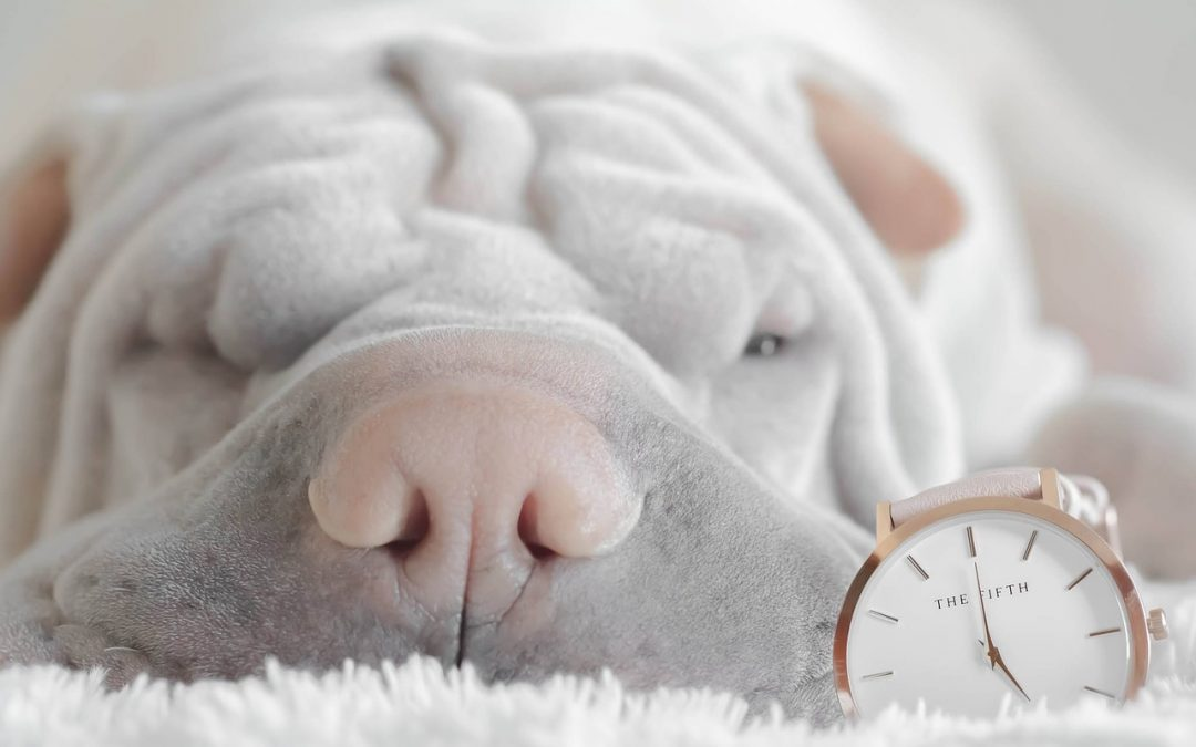 Little-Known Facts About Daylight Saving Time For Dogs