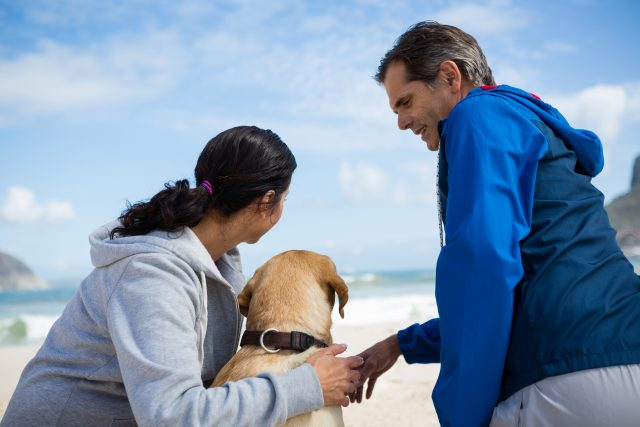 pet care options for travel