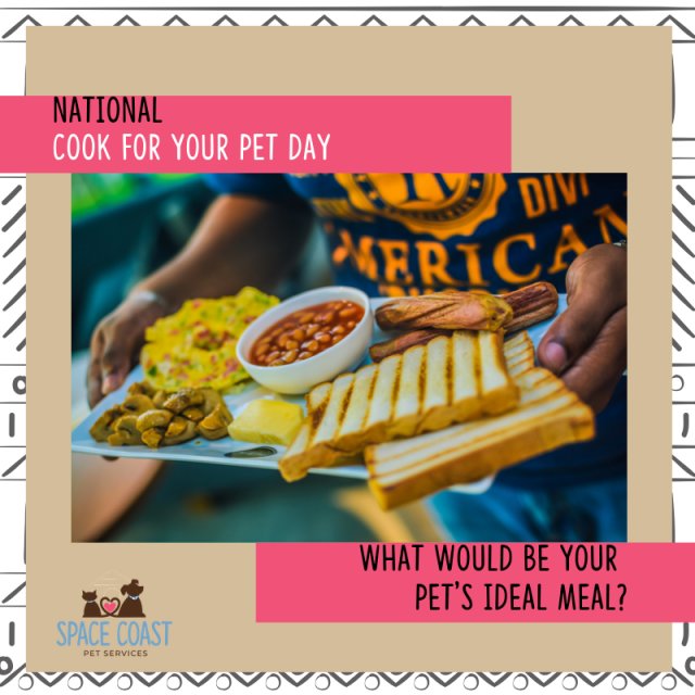 meals for pets