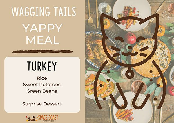 Yappy Meal Cats - Turkey 1