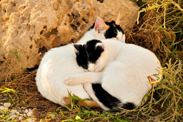 help for feral cats in brevard county florida