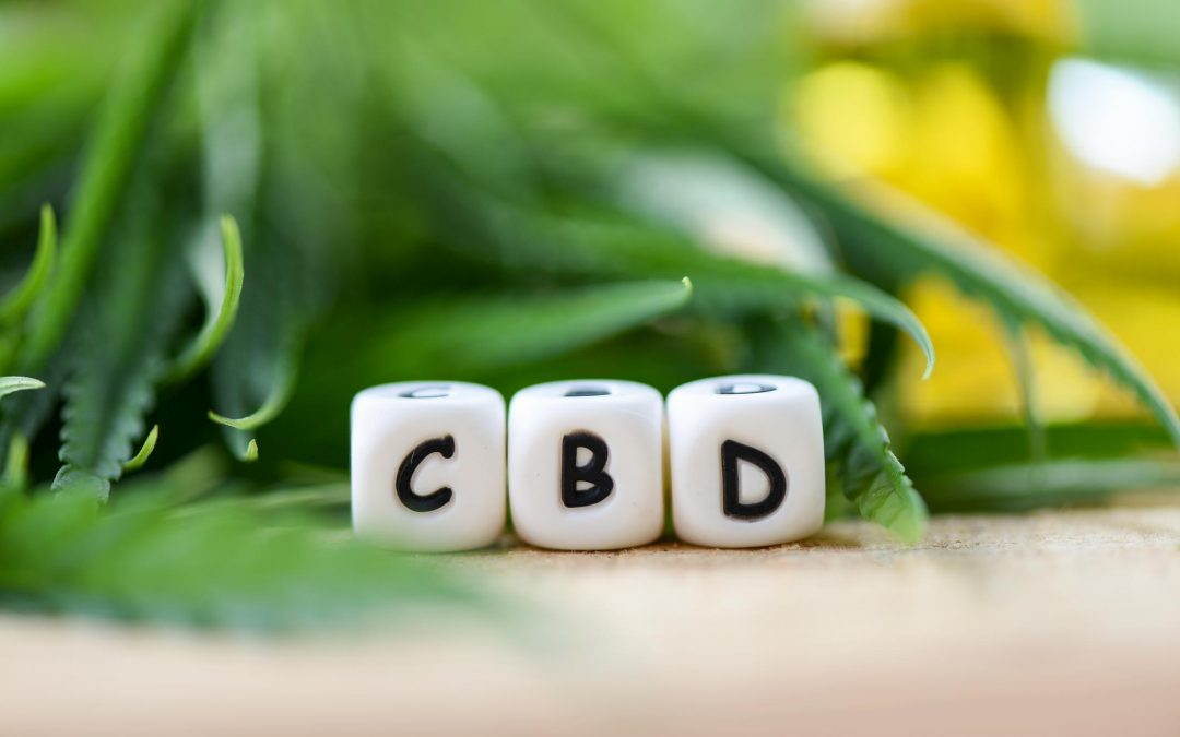 CBD Oil for Pets – What You Need to Know
