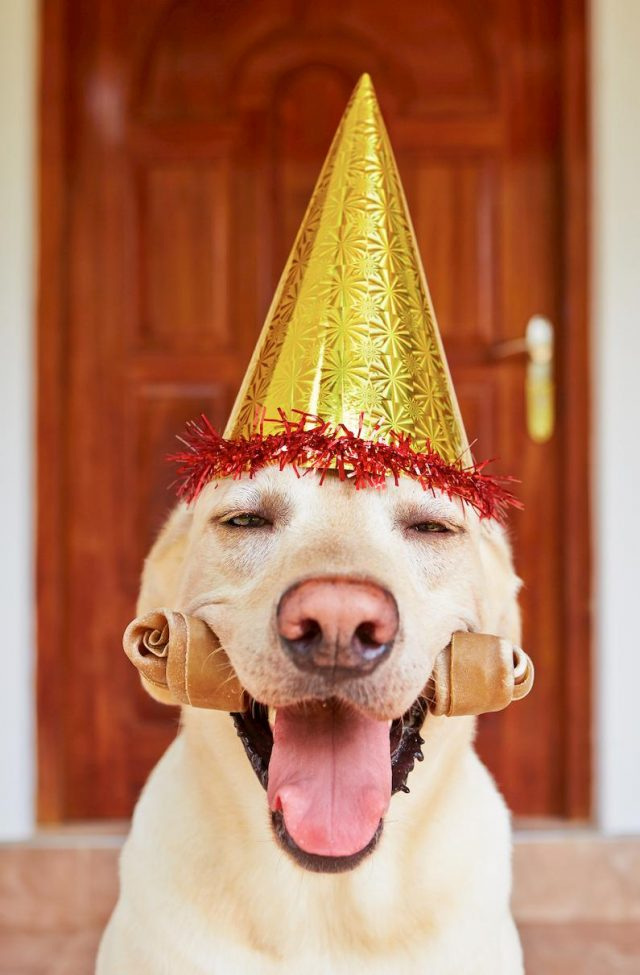 ultimate guide to hosting a party for your dog