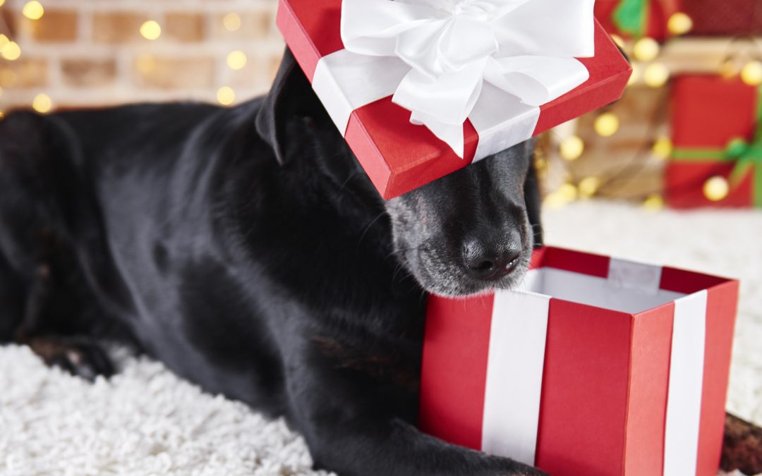 7 Unique DIY Holiday Gifts to Make for Dogs