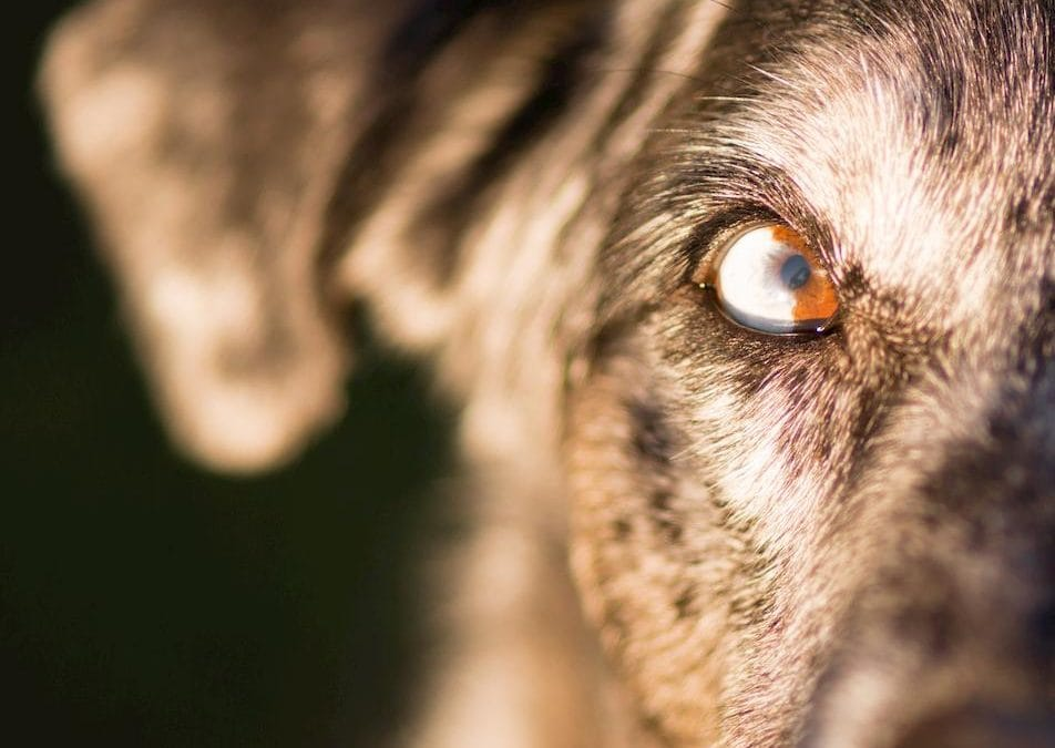 Aggression in Dogs: Signs, Symptoms & Solutions