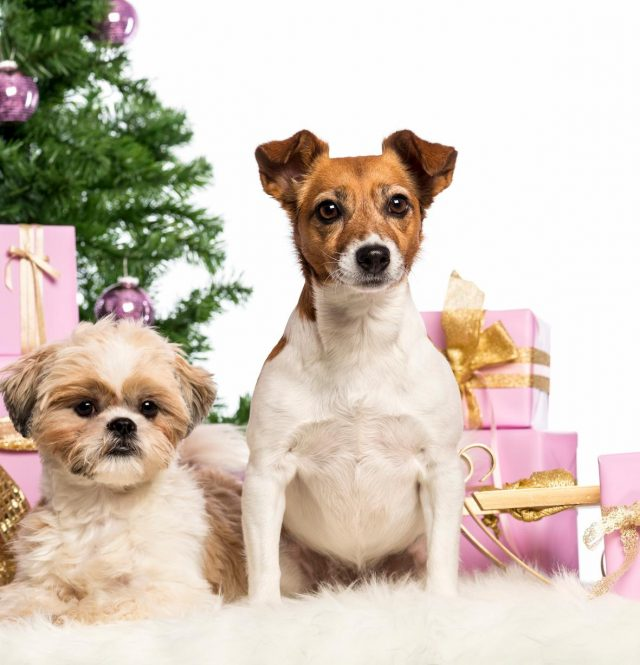 holiday gifts for dog