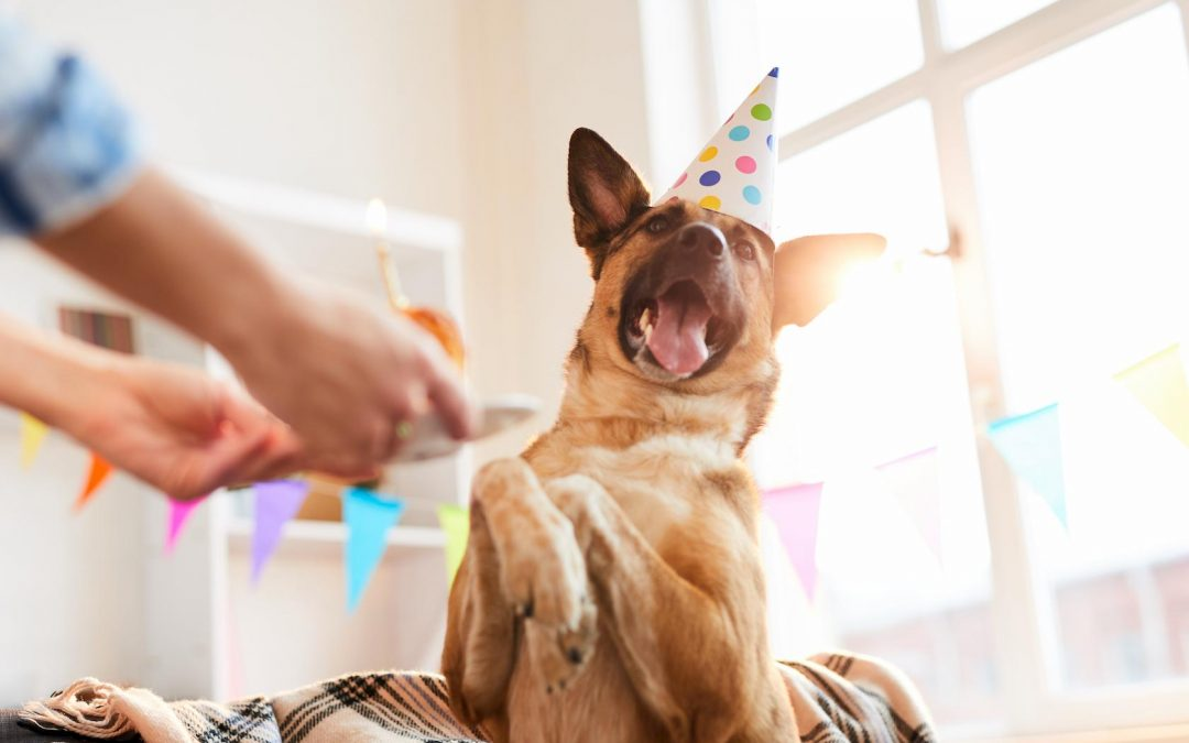 The Ultimate Guide to Hosting a Party for Your Dog