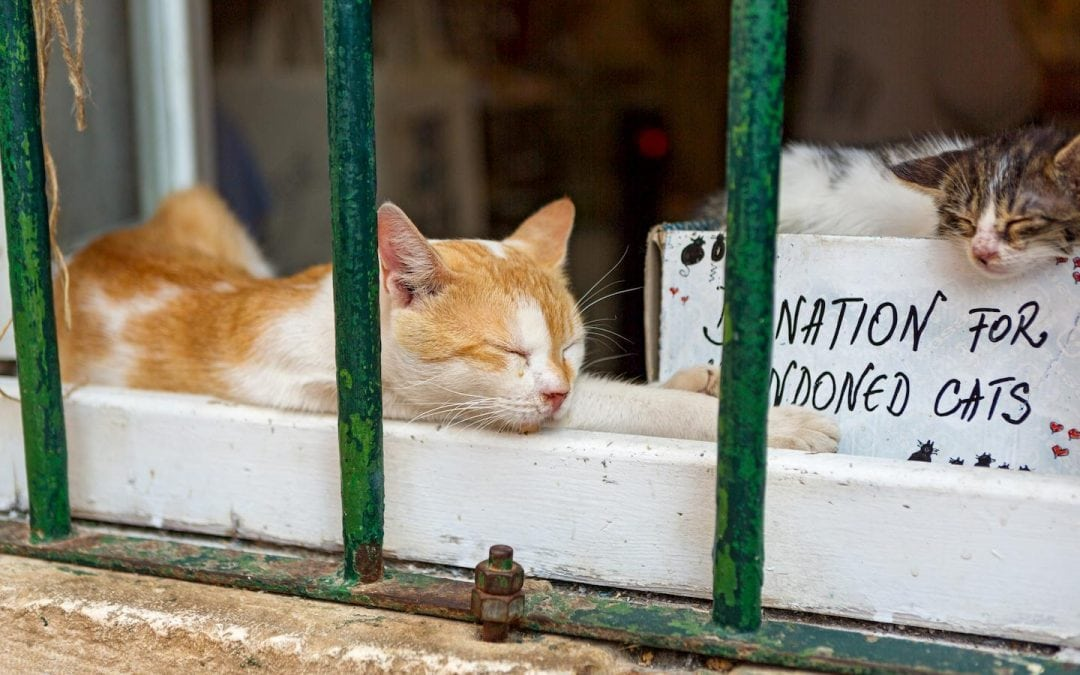 Exploring the Skyrocketing Number of Feral Cats in Brevard County