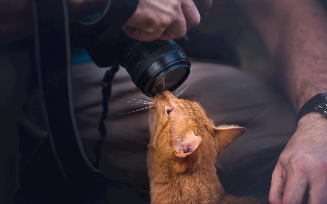 6 Tips and Tricks for Getting the BEST Pictures of Your Pet