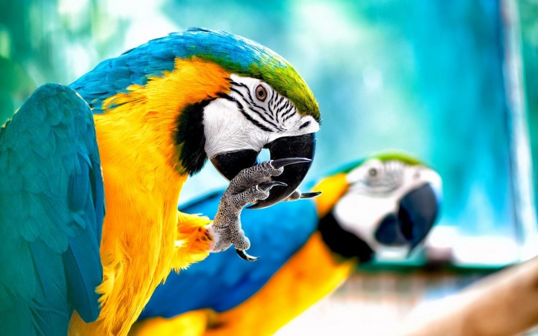 Exotic Birds in Brevard: Parrots as Pets
