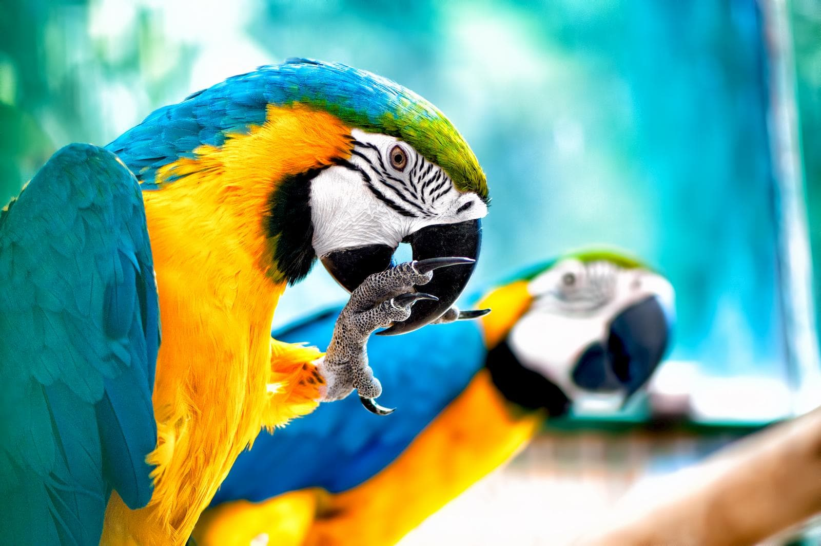 Exotic Birds in Brevard: Parrots as Pets - Space Coast Pet Services