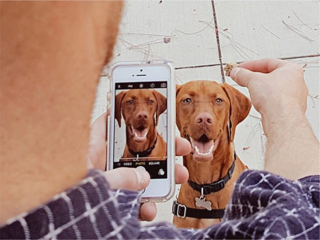 tips and tricks for pet pictures