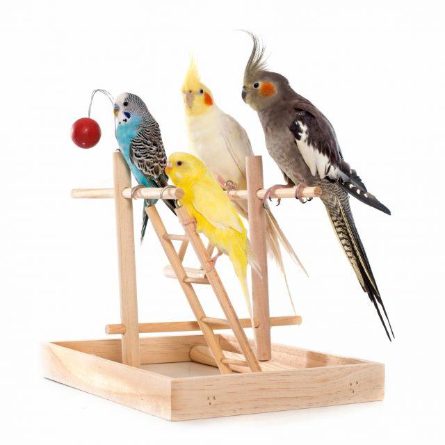 exotic birds in Brevard