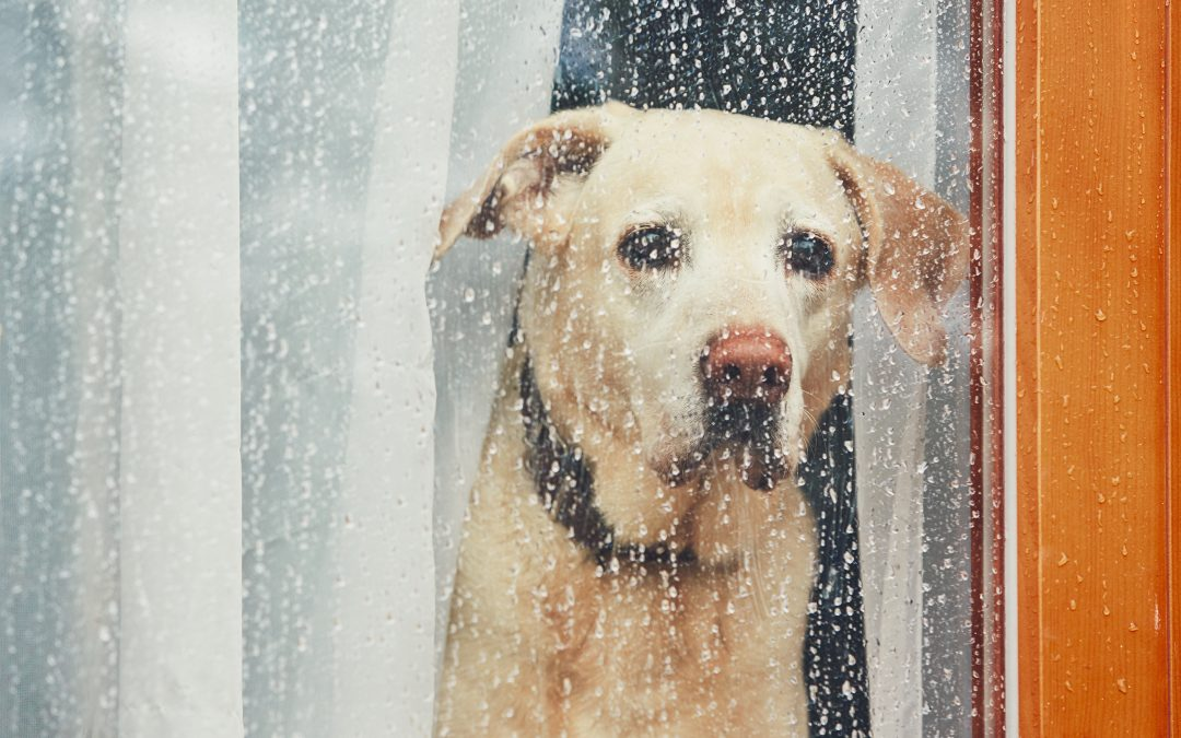Trusted Ways to Help Your Dog with Separation Anxiety