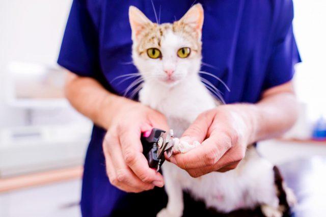 cat groomer in brevard county