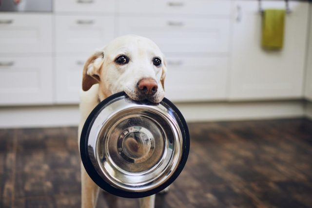 benefit and risk of raw dog food diet