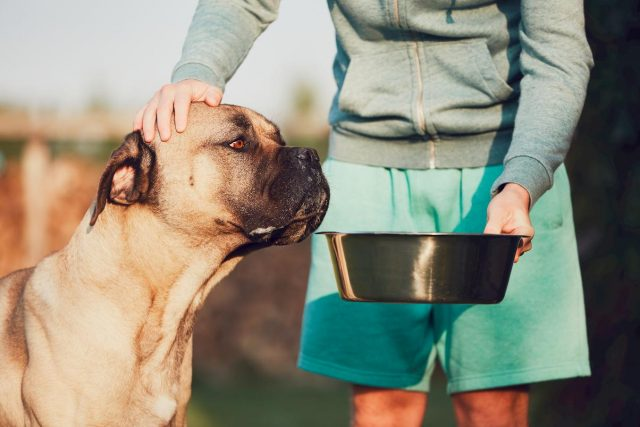 feeding your dog a raw food diet