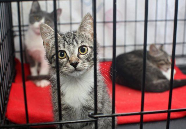 no kill animal shelter brevard county