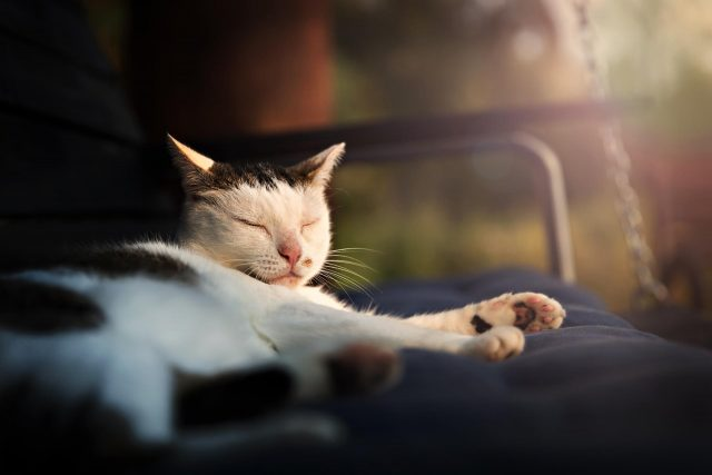 how much sleep do cats need