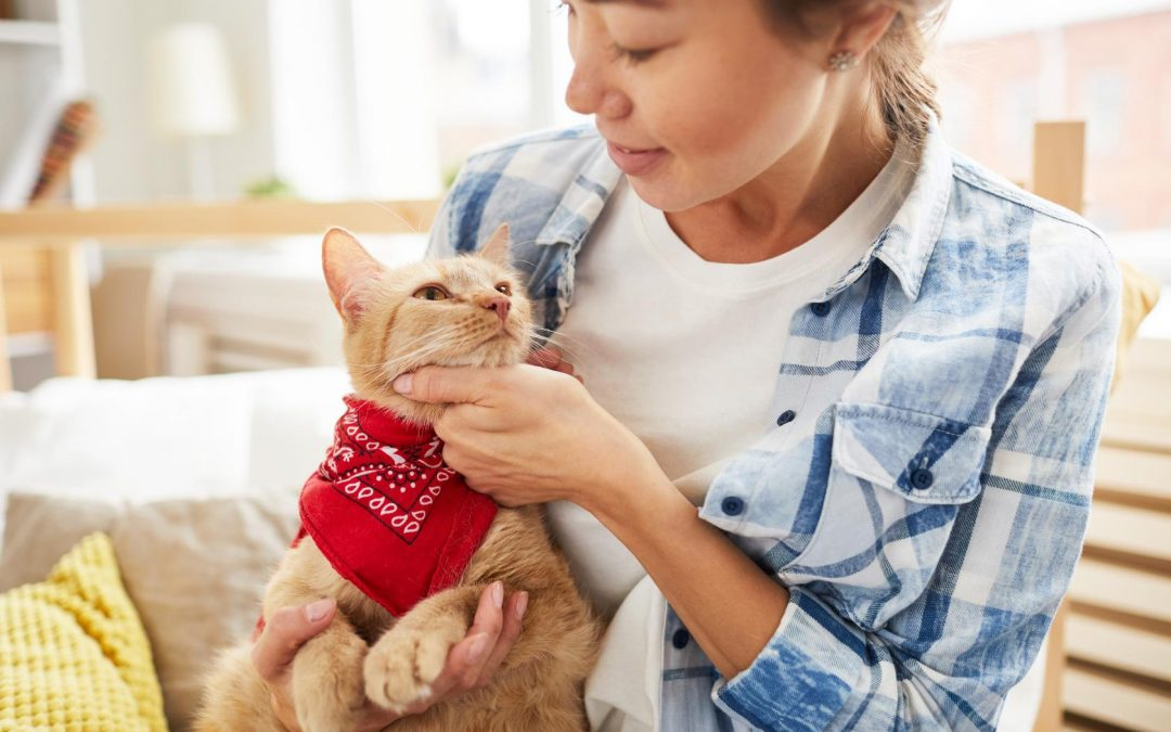 4 Compelling Reasons Why Your Kitty Needs a Cat Sitter