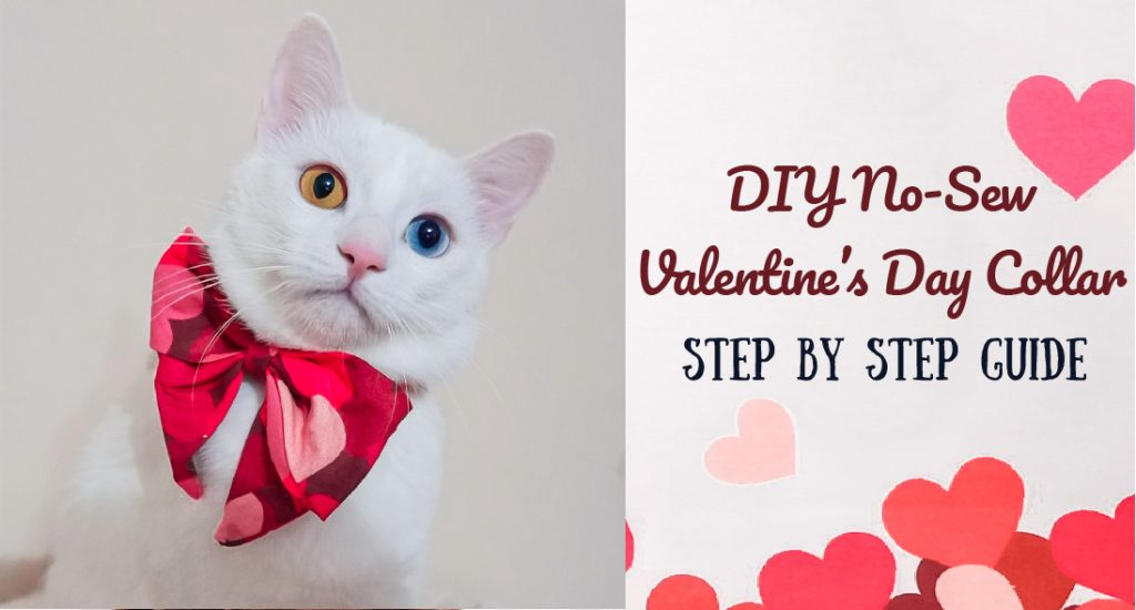 DIY No-Sew Valentine's Day Collar for Cat or Dog