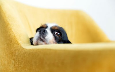 train your dog to stay off couch
